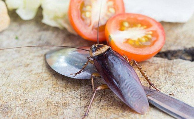 Cómo deshacerse de las pulgas, cucarachas, moscas de la fruta y otras plagas del hogar